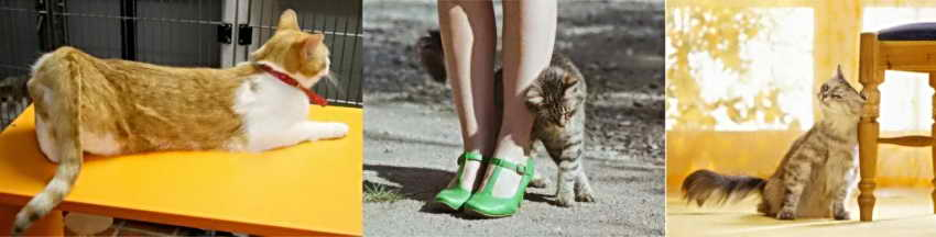 Чем помочь кошке при течке в домашних условиях 333