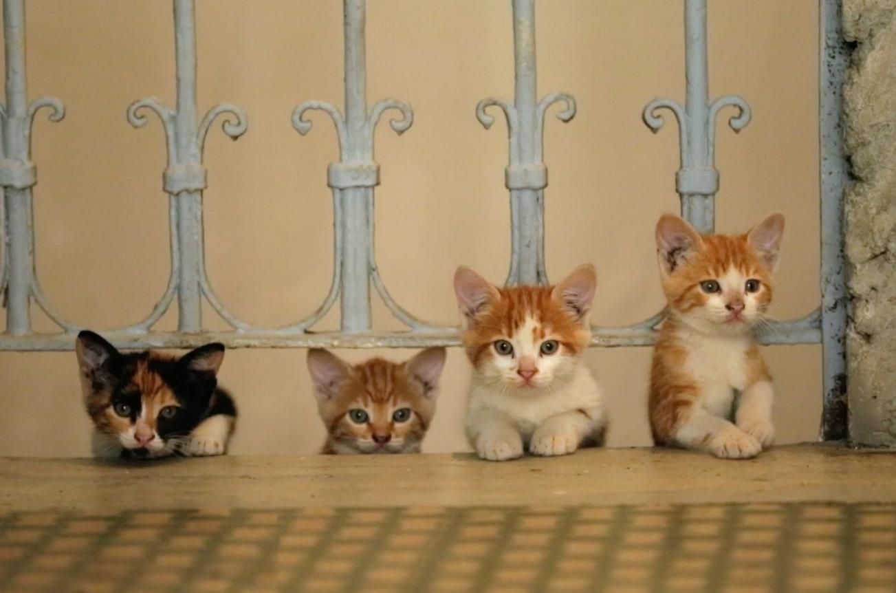 уличные котята: за и против, уход