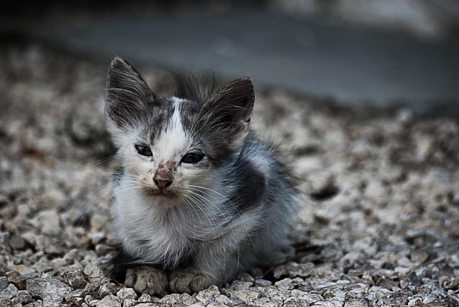 котята: особенности ухода
